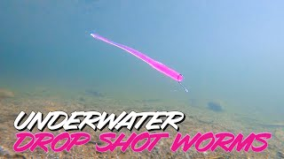 Underwater Footage! Dropshot Worm Comparison - Which Would You Choose?
