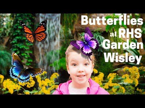 Butterflies & Crazy Fish at Wisley Gardens 2018