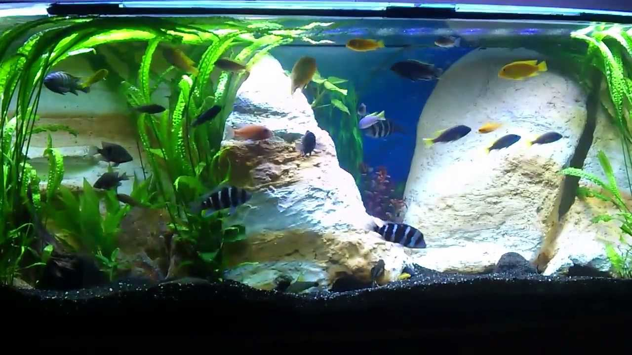 buntbarschbecken aquarium 450 liter youtube. Black Bedroom Furniture Sets. Home Design Ideas