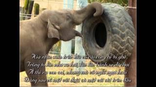 #09 Con voi (Kìa nhìn xem trên kia có cái con chi to ghê)