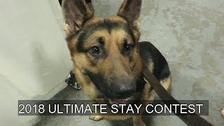 Can your dog stay under heavy distractions?? This contest will put you to the test
