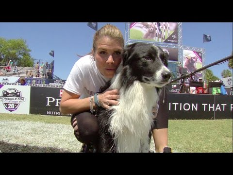 Full 30 Weave Up & Back Competition - 2017 Purina® Pro Plan® Incredible Dog Challenge® Eastern