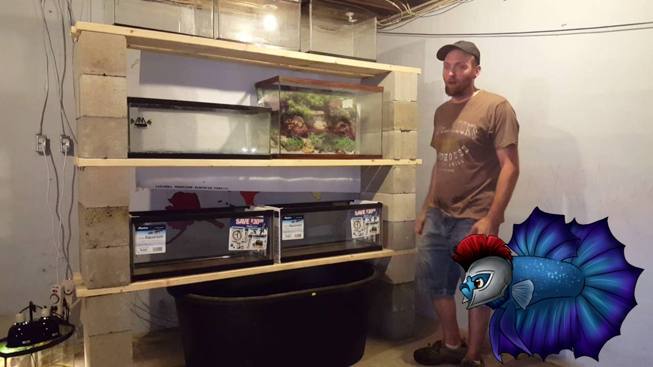 One Wall Of Fish Room Set Up Diy Youtube