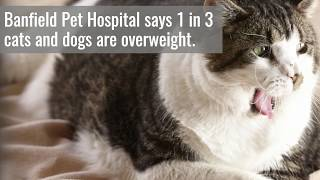 US pets are getting fatter