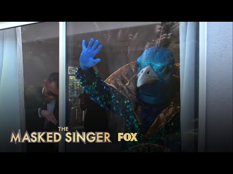 The Clues: Peacock | Season 1 Ep. 8 | THE MASKED SINGER