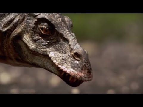 T-Rex : Attack Of The Dinosaur | Walking With Dinosaurs In HQ | BBC