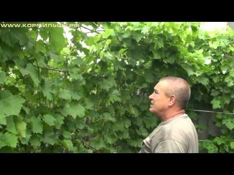 Обучающие видео по виноградарству