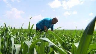 Ukraine turmoil threatens farmers and global markets