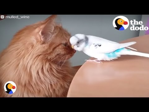 Cat and Bird Best Friends Are INSEPARABLE | The Dodo