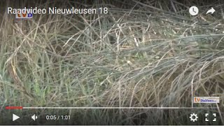 Raadvideo Nieuwleusen 18 Waar is het moeras??