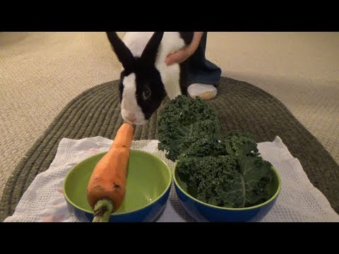 What Is A Rabbit's Favorite Food? Kale Or Carrot?