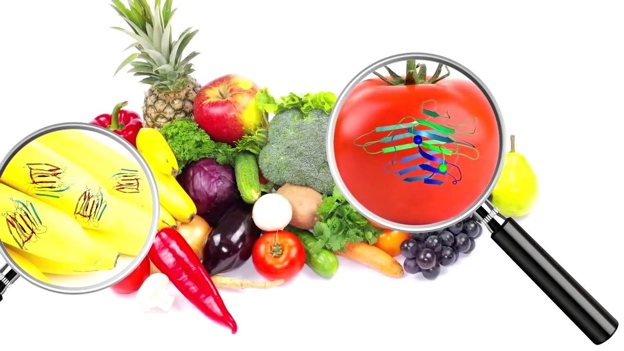 what is a lectin free diet