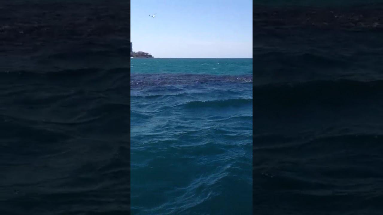 Стая пеленгаса у берегов Анапы: невероятно красивое видео
