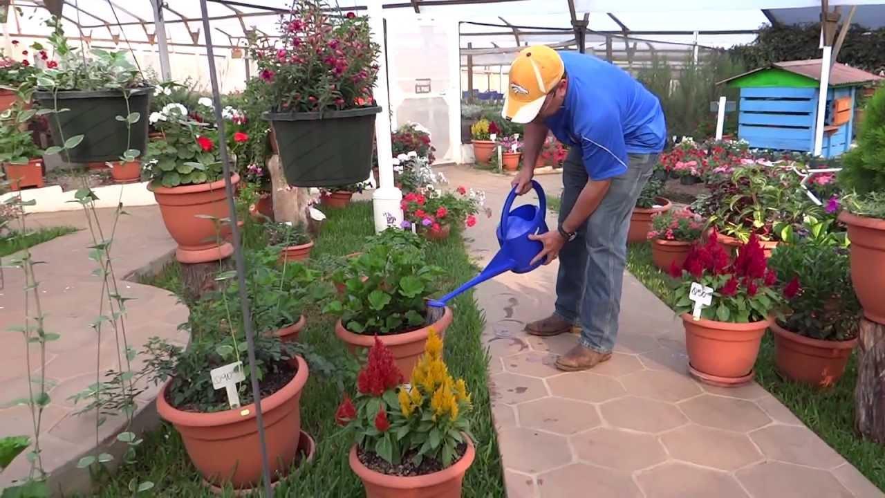 Como regar tus plantas y macetas youtube - Como cuidar las hortensias en maceta ...