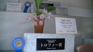 世界らん展日本大賞, International Orchid Festival 2018, 2/33