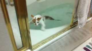 Richard the Failcat falls into the bathtub