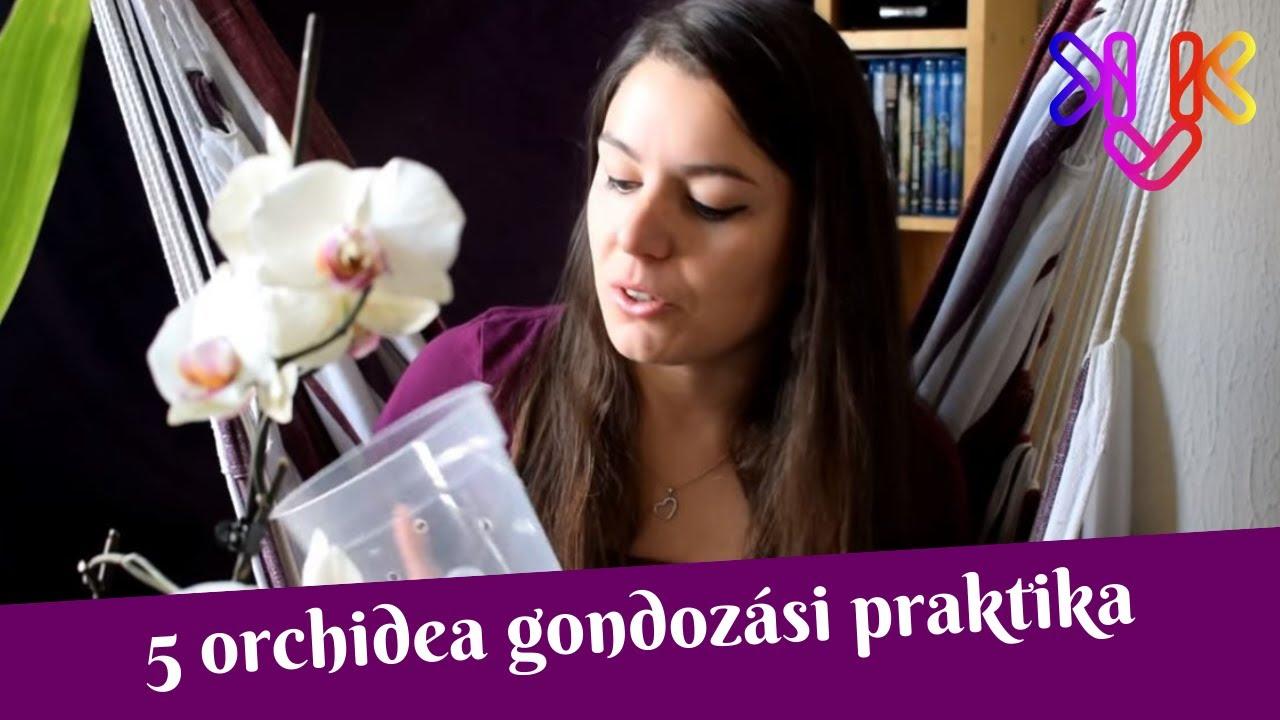 Download Orchidea gondozása   5 praktika, ami segíti az orchideák fejlődését