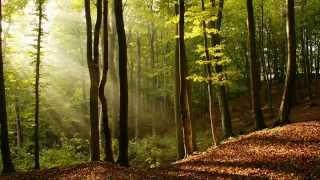 Релакс, музыка для души, звуки исцеляющей природы для расслабления и спокойного сна.(Релакс, звуки природы под нежную спокойную музыку, отдых для души., 2015-06-05T18:46:19.000Z)