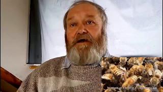 видео Половая зрелость пчелиной семьи