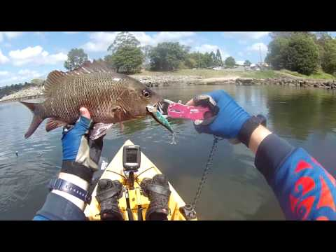 Kayak Fishing in South East Queensland - Mangrove Jack and Barramundi on surface lures!
