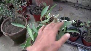 Early Spring Gardening Tips | Overview Gardening (Urdu/Hindi)