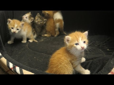 Kittens with mom in the basement