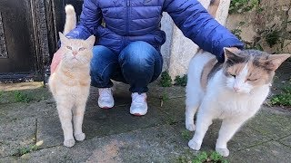 Cat with three colors and yellow cat want food and love