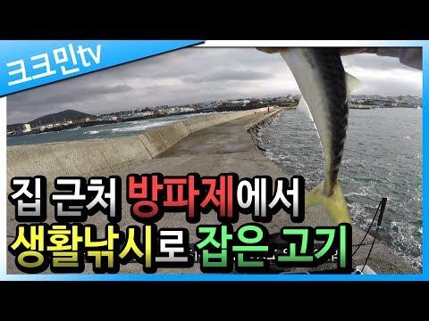바다 낚시 영상(제주도 방파제, 신촌포구)