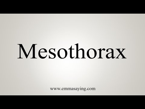 How To Pronounce Mesothorax