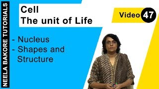 Cell  - The Unit of Life - Nucleus - Shapes and Structure