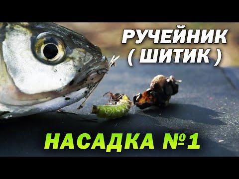 Ручейники - ЛУЧШАЯ НАСАДКА для рыбалки на фидер весной на реке