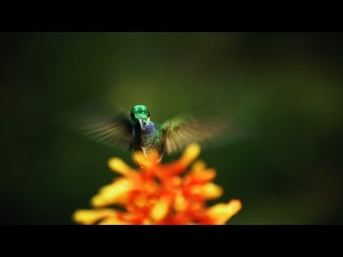 Video image: The hidden beauty of pollination - Louie Schwartzberg