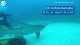 WEB EXTRA: Shark Rescue