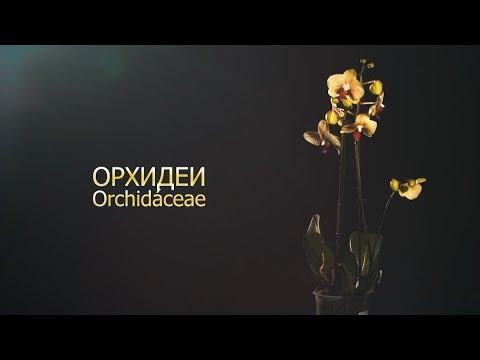Наука 102 - Орхидеи - самые капризные растения на планете.