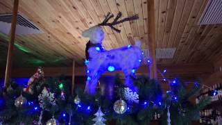 видео Корпоратив на Алтае: потрясающая природа и активный отдых