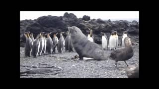 Изнасилование пингвинов морскими котиками (Часть III)