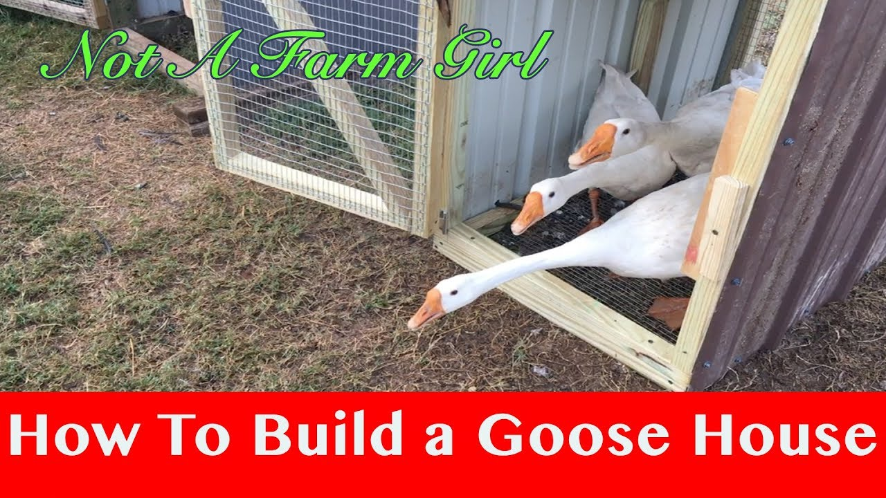 How to build a goose house youtube - Make a house a home ...