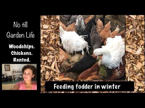 Feeding fodder in winter