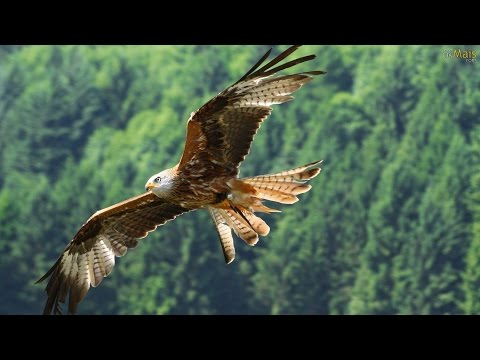 FLY LIKE AN EAGLE - Native American Song (Voar Como Águia - legenda PT)