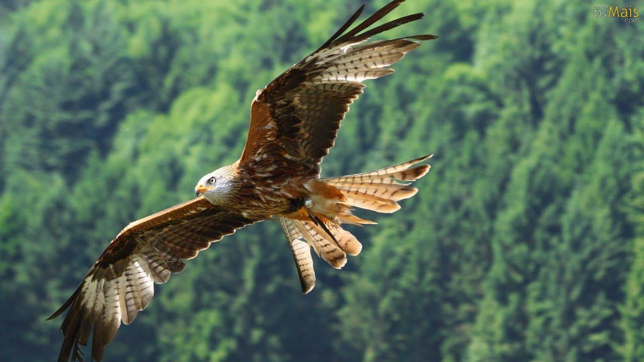 Fly like an eagle native american song voar como guia fly like an eagle native american song voar como guia legenda pt youtube biocorpaavc Gallery