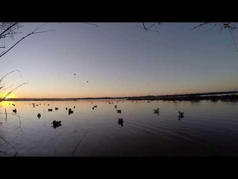 Lake Livingston Duck Hunting