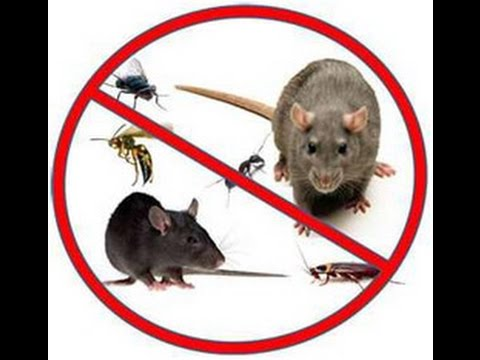 5 Methods for Effective Rodent Control