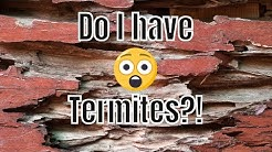 How Do I Know If I Have Termites? 🐜🏡 Pictures and Signs of Termites in Your Home
