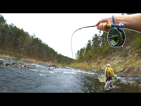 Fly Fishing For TROUT In A Shallow River In Oklahoma