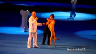 Watching Super Dogs at PNE Vancouver 2011 This Pharaoh Hound has in...