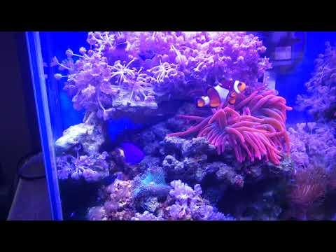 Вопрос: Какая рыба превращает кораллы в превосходный песок?