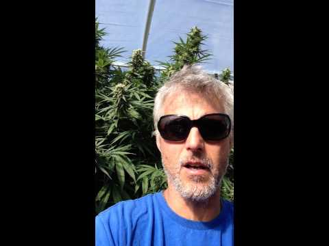 NGC certification from organic cannabis growers society