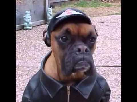 morsomme hunder 6   youtube