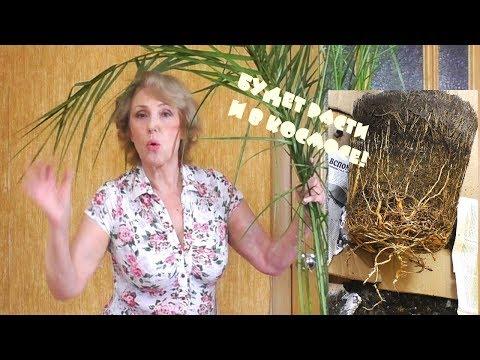 Это открытие перевернуло мои представления! Финиковая пальма.