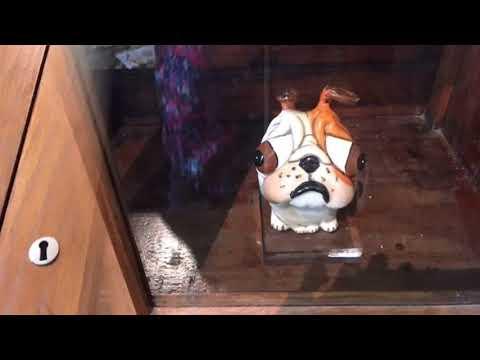 Collectibulldogs.com at Brighton museum